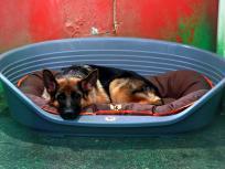 कोरोना से तीन महीने पहले हुई मालिक की मौत, पर अस्पताल के बाहर इंतजार करता रहा ये पालतू कुत्ता और फिर...