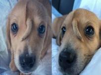 'माथे पर पूंछ' वाला कुत्ता सोशल मीडिया पर वायरल, जमकर शेयर की जा रही तस्वीरें