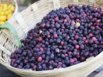 Diet tips: दिखते ही थोक के भाव खरीद लेना यह फल, इम्यूनिटी सिस्टम को करता है मजबूत, शरीर में बनाता है खून