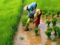 पश्चिम बंगाल के एक भी किसान को नहीं मिला प्रधानमंत्री किसान सम्मान योजना का लाभ