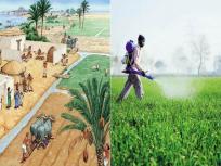 एन. के. सिंह का ब्लॉग: भारत में कृषि क्षेत्र ने दिखाई अभूतपूर्व क्षमता