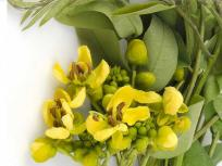 कब्ज, बवासीर और पेट के कीड़ों को एक दिन में खत्म करती हैं इस पौधे की हरी पत्तियां