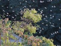 Locust Attack: दिल्ली से सटे गुरुग्राम पहुंचा टिड्डियों का झुंड, फिलहाल दिल्ली का रुख नहीं