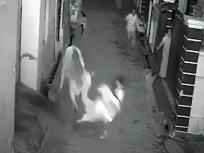 हरियाणा में बुजुर्ग महिला व एक लड़के पर सांड ने किया जोरदार हमला, देखें वायरल वीडियो