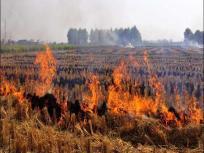 सीपीसीबी रिपोर्ट में दावा- हरियाणा और पंजाब में इस साल पराली जलाने की करीब 3 हजार घटनाएं सामने आईं