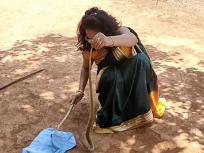 साड़ी पहनकर सांप को पकड़ते इस महिला का वीडियो वायरल, आखिर क्यों आई ऐसी स्थिति, जानिए पूरा मामला