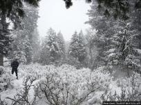 Weather Updates: पहाड़ों में नये सिरे से बर्फबारी, मैदानों में बारिश से तापमान में वृद्धि