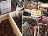 फिर से खुल गया चीन के वुहान का जानवरों वाला वो बाजार जहां से फैला था कोरोना वायरस