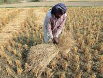 फसल बीमा को लेकर 400 से अधिक किसान पहुंचे गुजरात HC, रूपाणी सरकार को भेजा नोटिस