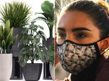Air Purifier का काम करते हैं ये 6 पौधे, आज ही ले आएं घर मिलेगी शुद्ध हवा
