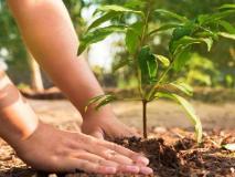 लखनऊ से जाने वाले सभी 14,500 हज यात्रियों के लिए 'एक हाजी एक पेड़' योजना लागू