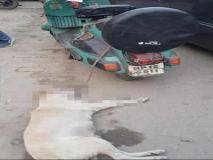 शर्मनाक! गाजियाबाद में कुत्ते को स्कूटर से बांधकर मरने तक घसीटते रहे दो युवक, एक गिरफ्तार