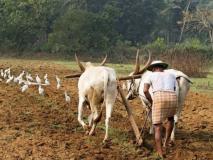 एन. के. सिंह का ब्लॉग: जीरो बजट खेती में शंकाओं पर भी गौर करें