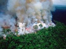अमेजन आग: जनजातीय प्रमुख ने ब्राजील के राष्ट्रपति पर लगाए गंभीर आरोप, कहा- वे वर्षावन को नष्ट करना चाहते हैं