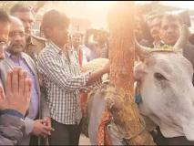 अब गाय पर बीजेपी को घेरेंगे केजरीवाल, बोले- जो गाय के नाम पर वोट मांगते हैं, उन्हें चारा भी देना चाहिए