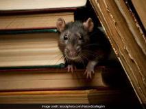 प्रत्याशीका दावा,स्ट्रांगरूम में रखी ईवीएम को चूहों से खतरा, अधिकारियों ने मना किया