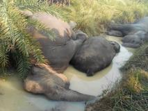 ओडिशा में 7 हाथियों की मौत पर 9 अधिकारी बर्खास्त, सीएम ने क्राइम ब्रांच को सौंपी जांच