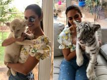 ईशा गुप्ता ने व्हाइट शेर और बाघ के बच्चों के साथ साझा की तस्वीरें, देखें वायरल Photos