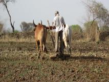 राजस्थानः किसानों के लिए केवल कर्जमाफी नहीं संपूर्ण समाधान, ब्याजखोरों पर भी कसे शिकंजा