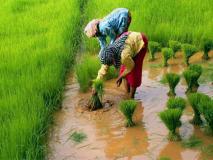 भरत झुनझुनवाला का ब्लॉग: किसानों को बढ़ा समर्थन मूल्य क्यों नहीं मिल रहा?