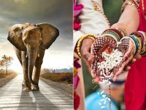 पति-पत्नी बेडरूम में लगाएं हाथी की ऐसी तस्वीर, झगड़े कम होंगे, बढ़ेगा प्यार