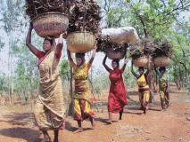 गढ़चिरोली के आदिवासियों को 'ताकतवर चावल' खिलाएगी सरकार, ऐसे होता है तैयार