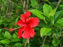 शरीर में खून बढ़ाता है ये पौधा, डायबिटीज, हार्ट अटैक, बीपी, यौन समस्या को भी कर सकता है खत्म