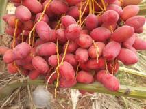 हफ्ते में बस 3 दिन खा लें ये फल, जीवन में कभी नहीं होंगे दिल, हड्डी, आंत, किडनी, लिवर के रोग!