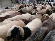 Eid al-Adha 2019: ईद के मौके पर सरकार ने कश्मीर में लोगों के लिए उपलब्ध करायी 2.5 लाख भेड़ें