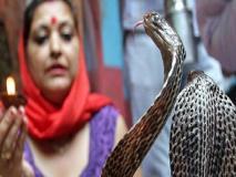 Nag Panchami 2019: 'सांपों का एक गांव' जहां घरों में साथ-साथ रहते हैं कोबरा और आम लोग