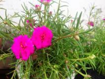 सोने से कीमती है ये पौधा, बाल झड़ने, गंजेपन से लेकर कई रोगों को कर सकता है जड़ से खत्म