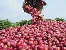 महाराष्ट्र: नासिक के किसान ने PMO को लिखी चिट्ठी, प्याज की गुणवत्ता पर सरकारी रिपोर्ट को बताया 'गलत'