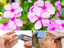 Pics: दिखने में छोटे-छोटे हैं गुलाबी फूल, लेकिन फायदों को जानकार रह जाएंगे हैरान