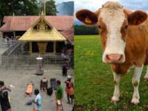 फिल्म डायरेक्टर ने सबरीमाला पर लिखी विवादित कविता, नाराज भक्तों ने फेंका गाय का गोबर