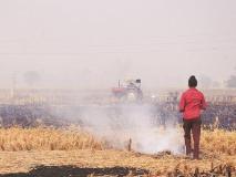 पंजाब में पराली नहीं जलाने वाले 29,000 से अधिक किसानों को मिला मुआवजा