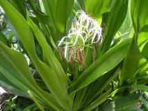गठिया, कान दर्द, दांत दर्द जैसी 7 पीड़ादायक बीमारियों को जड़ से खत्म कर देता है यह हरा पौधा