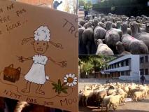 स्कूल पंहुचा बंद होने की कगार पर, तो करवा दिया 15 भेड़ों का एडमिशन, देखें Photos