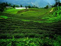 दुनिया का पहला ऐसा राज्य जहां होती है 100 प्रतिशत जैविक खेती, UN ने भारत को दिया बड़ा अवॉर्ड