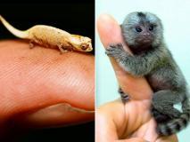 ये हैं दुनिया के सबसे छोटे 13 जानवर, देखें तस्वीरें