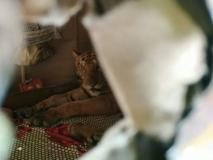 जब घर में बिस्तर पर आराम से बैठा मिला बाघ, देखें तस्वीरें