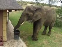 बगीचे का कचरा डस्टबिन में डालते हुए हाथी का वीडियो वायरल, लोगों ने जानवर को बताया इंसान से बेहतर, देखें VIDEO