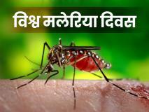 World Malaria Day: मलेरिया का पहला लक्षण ऐसे पहचानें, इलाज में कारगर साबित हो सकता है अदरक