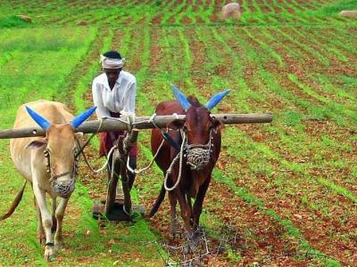 'प्रधानमंत्री किसान सम्मान निधि योजना' में किसानों की सहायता कम लेकिन स्थिति सुधरेगी: मुख्य आर्थिक सलाहकार