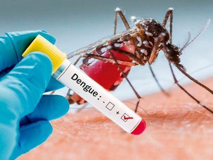 dengue ka ilaj: Centre Warns 11 States About Dangerous Serotype-II Strain, know dengue prevention tips and home remedies in Hindi   Dengue ka ilaj: देश के 11 राज्यों में सीरोटाइप-II डेंगू की चेतावनी, जानिये डेंगू से बचने के उपाय और घरेलू इलाज