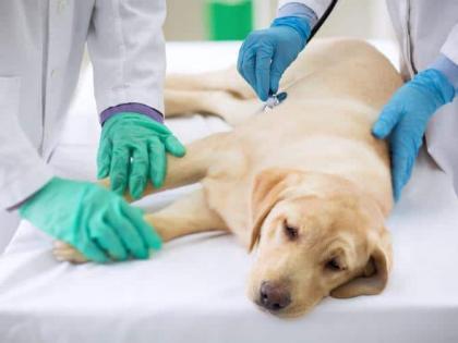 biharMuzaffarpur owner broke the dog's eyeharassing and not treatingFIR police case   मुजफ्फरपुरः मालिक ने कुत्ते की फोड़ दी आंख,प्रताड़ित और इलाज नहीं करने परFIR, जानें क्या है पूरा मामला