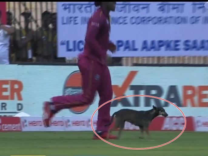 India vs West Indies, 1st ODI: dog running around on the field amid great cheers from the crowd | IND vs WI: जब मैदान में घुस आया कुत्ता, रोकना पड़ गया मैच