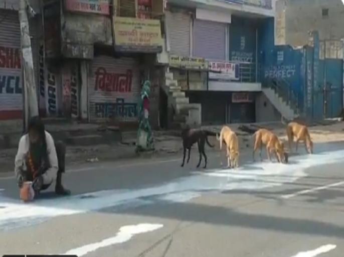 videos Man and Dogs Sharing Spilt Milk In Agra Shows Lockdown Desperation | ...जब सड़क पर बिखरे दूध को इंसान और कुत्ते एक साथ पीने लगे, देख कर आपकी आंखें हो जाएगी नम