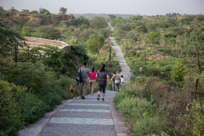 Indian govt plan Gujarat to Delhi 1400 km long 'Green Wall of India', all you need to know | गुजरात से दिल्ली तक 1400 किमी लंबी 'ग्रीन वॉल ऑफ इंडिया' की योजना, पाक से आने वाली रेतीली हवाओं पर लगेगी लगाम!