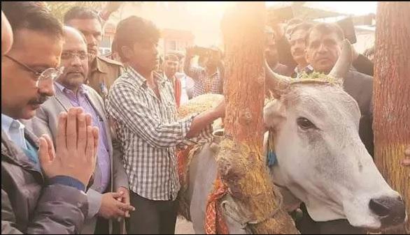 Arvind kejriwal slams Bjp says those seek Votes cow name should also provide fodder | अब गाय पर बीजेपी को घेरेंगे केजरीवाल, बोले- जो गाय के नाम पर वोट मांगते हैं, उन्हें चारा भी देना चाहिए