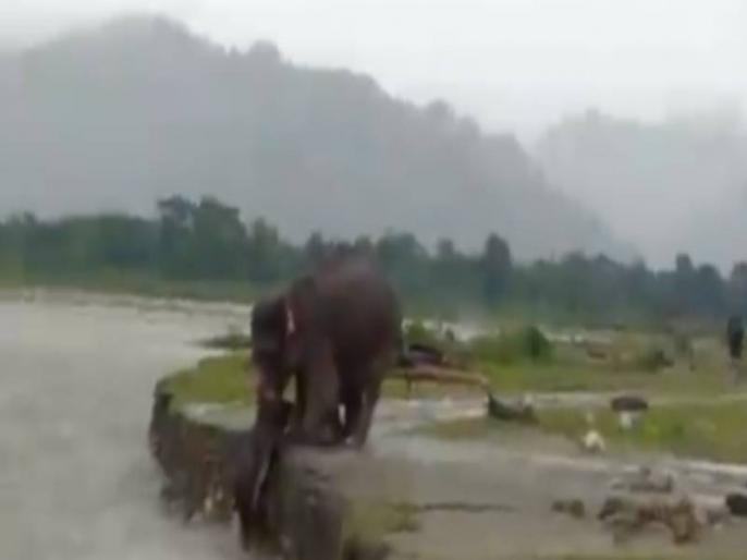 small elephant flowing in the river elephant saved his life see viral video | नदी में बह रहा था छोटा हाथी, हथिनी ने जान पर खेलकर ऐसे बचाई जान, देखें वायरल वीडियो